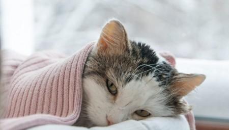 الصحة العامة: تسجيل أول حالة لحيوان أليف مصاب بكوفيد-19