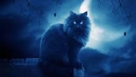 رصد شبح قطة ماتت منذ أسابيع في بريطانيا