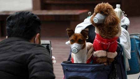 دراسة كندية: احتمال نقل عدوى كوفيد-19 من البشر إلى حيواناتهم