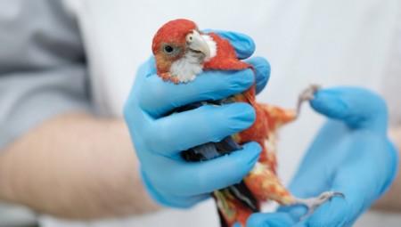 الاتحاد الأوروبي يستعد لحالات تفشي جديد لإنفلونزا الطيور