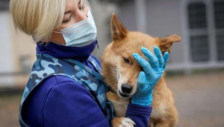 روسيا.. كلاب هجينة لرصد الإصابات بكوفيد-19