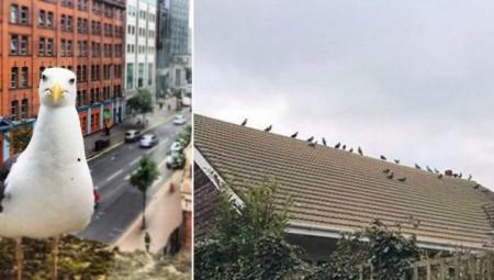 بريطانيا.. تغريم سبعينية بـ 3000 إسترليني لإطعام الطيور في منزلها وجعلها حياة الجيران جحيما'