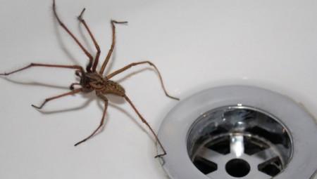 استعدوا.. العناكب تستعد لاجتياح منازلكم خلال الأسابيع القادمة