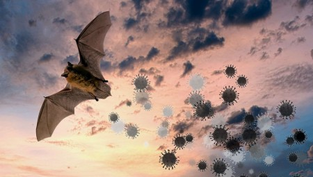 اكتشاف فيروس كورونا في خفافيش بريطانية