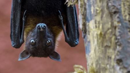 التلغراف: علماء معهد ووهان الصيني خططوا لنشر كورونا في الخفافيش سنة 2018